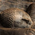 Polonnaruwa stone temple