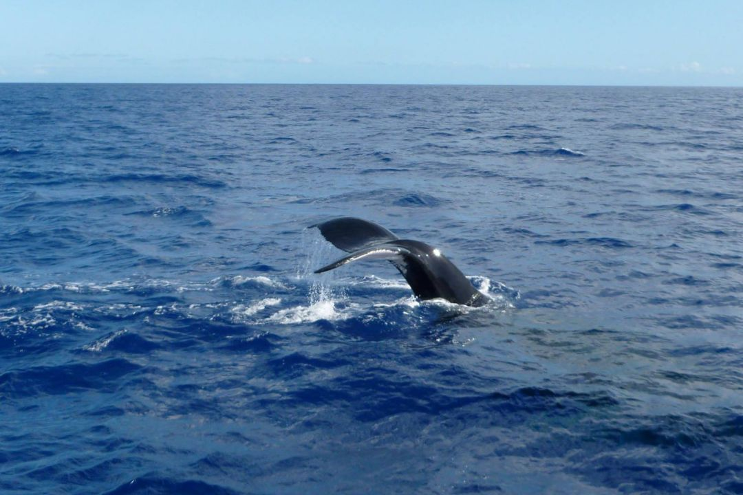 trincomalee whale watching