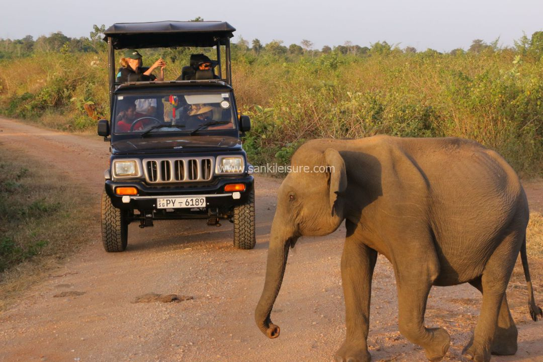 udawalawe-jeep-safari-evening