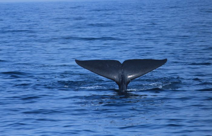 Whale tail-trincomalee