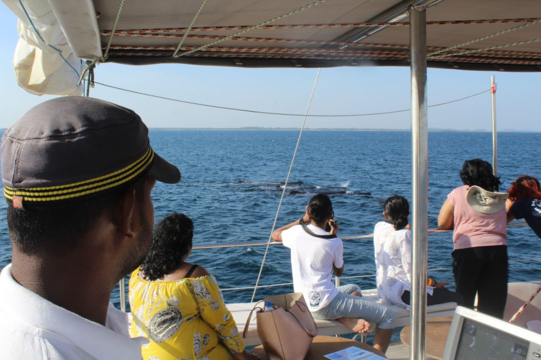 trincomalee-whale-by-sail-boat