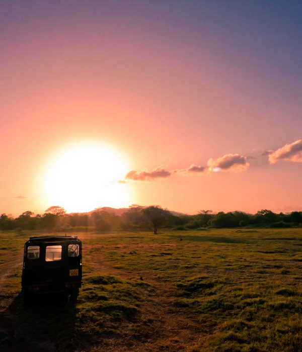 minneriya national park jeep safari
