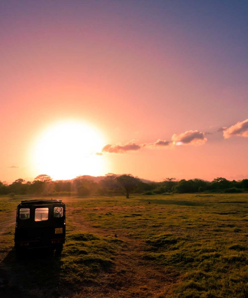 minneriya national park jeep safari