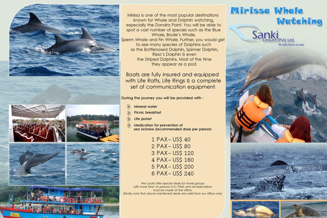 mirissa-whale-watching-price