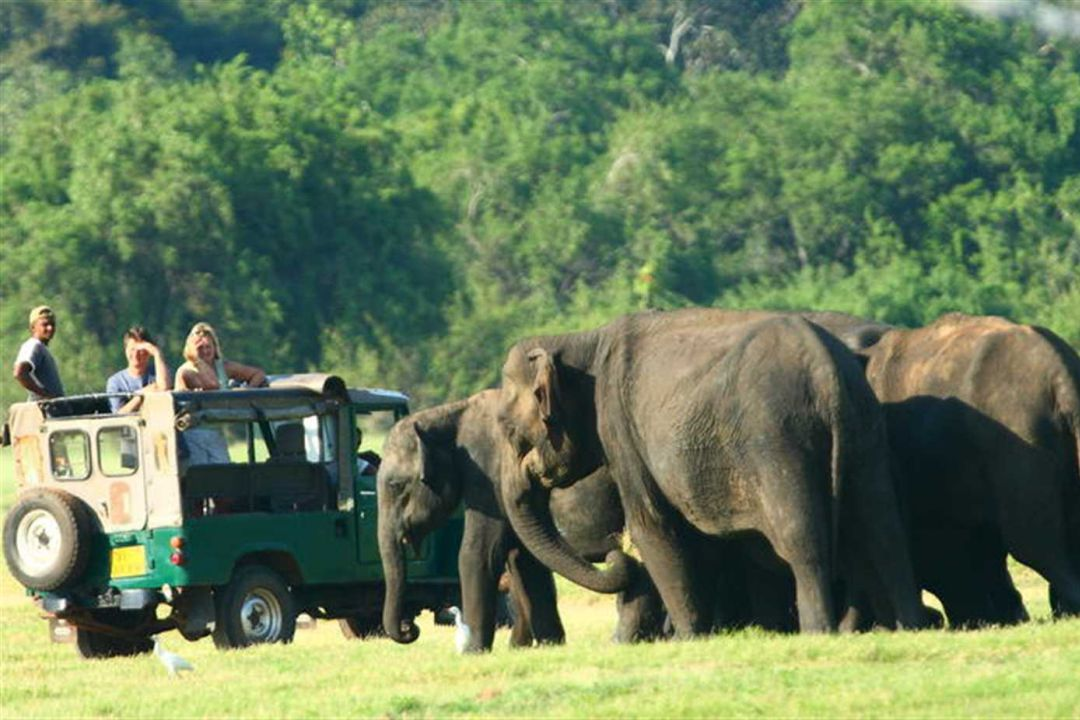 elephant-gathering-in-minneriya-jeep-safari