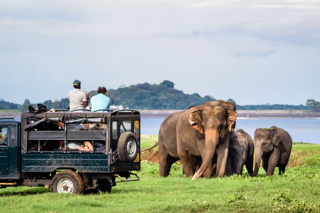minneriya-jeep-safari